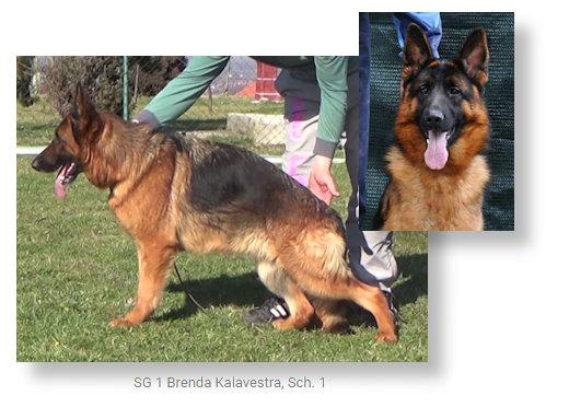 SG Brenda Kalavestra, Sch. 1