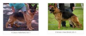 V Catya v Haberland, Sch. 1 and V Arman v Haus Brezel, Sch. 3 repeat breeding, outstanding puppies
