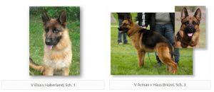 Upcoming litter: V Elsa v Haberland, Sch. 1 & V Arman v Haus Brezel, Sch. 3