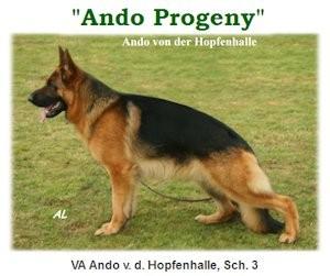 Ando Progeny